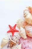 Coquillages et étoiles de mer Photos stock