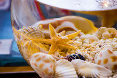 Coquillages et étoiles de mer avec des cailloux dans peu d'aquarium de cuvette Photo stock