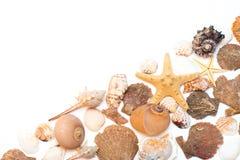 Coquillages et étoiles de mer d'isolement sur le fond blanc Photographie stock