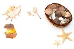 Coquillages et étoiles de mer d'isolement sur le fond blanc Photos libres de droits