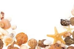 Coquillages et étoiles de mer d'isolement sur le fond blanc Photo libre de droits
