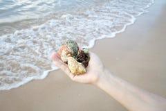 Coquillages et corail sur la main droite, cadeau de l'océan Image libre de droits