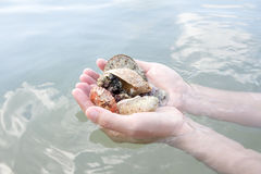 Coquillages et corail sur la main droite, cadeau de l'océan Photo stock