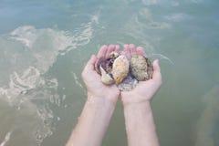 Coquillages et corail sur la main droite, cadeau de l'océan Images libres de droits