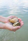 Coquillages et corail sur la main droite, cadeau de l'océan Photographie stock libre de droits