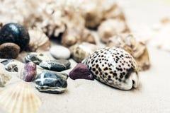 Coquillages et pierres sur le sable, concept de voyage de fond de plage d'?t? avec l'espace de copie pour le texte image libre de droits