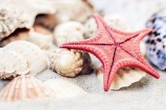 Coquillages et seastars rouges sur le sable, concept de voyage de fond de plage d'?t? photos libres de droits