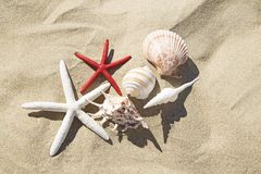 Coquillages et ?toiles de mer photos stock