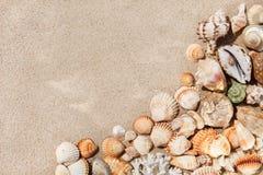 Coquillages exotiques sur le sable Fond de plage d'été Vue supérieure, cannette de fil photo libre de droits