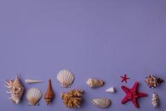 Coquillages marins sur le fond Photos libres de droits