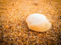 Coquillages naturels sur la plage photo libre de droits