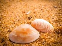 Coquillages naturels sur la plage photographie stock