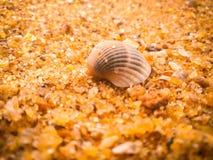 Coquillages naturels sur la plage photographie stock libre de droits