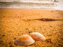 Coquillages naturels sur la plage image stock