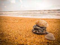 Coquillages naturels sur la plage photo stock
