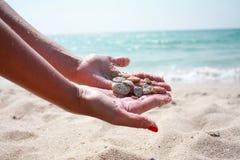 Coquillages par la mer images stock