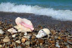 Coquillages par le bord de la mer photos stock