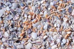 Coquillages réduits en fragments Image stock