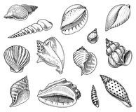 Coquillages réglés ou formes de molluscums différentes Créature de mer gravé tiré par la main dans le vieux croquis, style de vin illustration stock