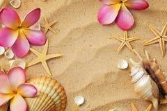 Coquillages sur la plage de sable photo stock