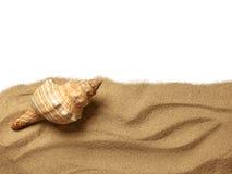 Coquillages sur la plage de sable image stock