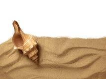 Coquillages sur la plage de sable image libre de droits