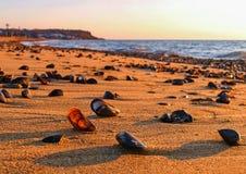 Coquillages sur la plage pendant le matin image stock