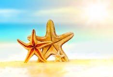 Coquillages sur la plage sablonneuse photo stock
