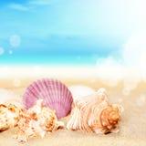 Coquillages sur la plage sablonneuse au fond d'océan images stock