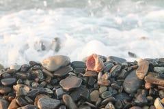Coquillages sur le fond de mer Photos stock