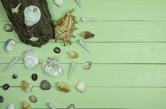 Coquillages sur le fond en bois vert photos libres de droits