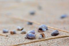 Coquillages sur le rivage du lac sur le sable images stock