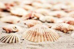 Coquillages sur le sable, fond de plage d'été, concept de voyage avec l'espace de copie pour le texte photos libres de droits