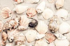 Coquillages sur le sable, fond de plage d'été, concept de voyage avec l'espace de copie pour le texte photographie stock