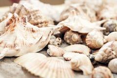 Coquillages sur le sable, fond de plage d'été, concept de voyage avec l'espace de copie pour le texte images stock