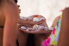 Coquillages sur les mains de deux filles Concept de vacances images stock