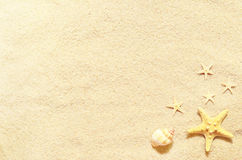 Coquillages sur une plage et un sable d'été comme fond Interpréteurs de commandes interactifs de mer images stock