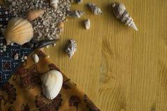 Coquillages sur une table en bois photos libres de droits
