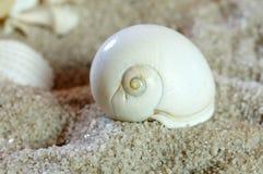 Coquille blanche d'escargot sur la plage sablonneuse image stock