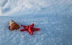 Coquille d'étoiles de mer et d'escargot dans la neige Image libre de droits