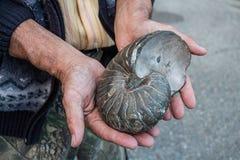Coquille d'ammonite dans des mains Images stock
