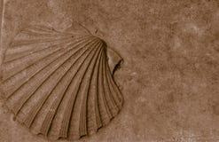 Coquille d?corative photo libre de droits