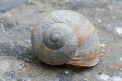Coquille d'escargot Photos libres de droits