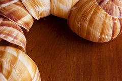 Coquille d'escargot Image stock