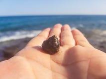 coquille de ‹d'†de ‹d'†de mer sur la paume contre la mer images stock