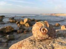 Coquille de bord de la mer pendant le matin images libres de droits