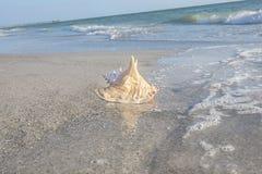 Coquille de conque sur la plage Photographie stock libre de droits