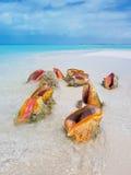 Coquille de conque sur la plage Photographie stock