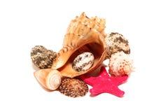Coquille de coque Photo stock
