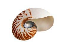 Coquille de coque de mer Photographie stock libre de droits